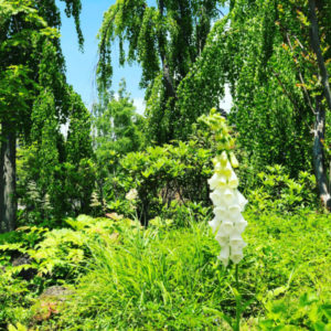 岩手県花巻市にある穴場温泉山の神温泉優香苑へ日帰り入浴で行ってきたブログ記事を大量の画像で雰囲気をお届け